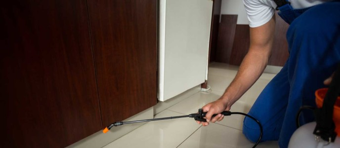 Pest Control Services to Create a Healthier Living Environment