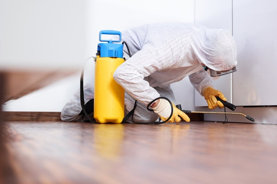 The Best Pest Control Services in Los Angeles