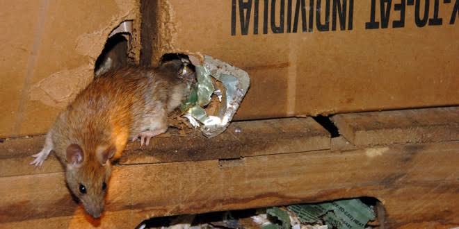 Pest Management Program for Rodents