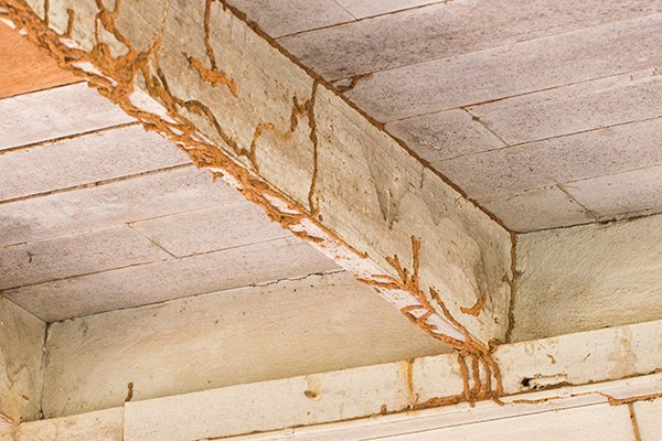 How to Recognize Termite Infestation in Building